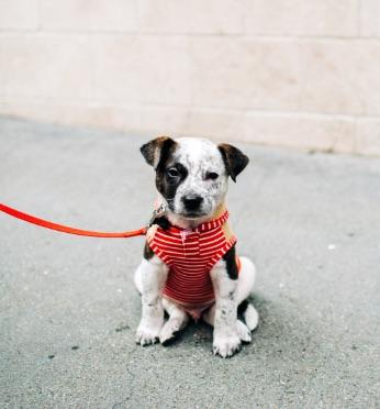 Faraday Park Dog